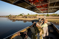 Botswana Group Photographs Chobe Elephants