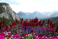Flowers, Banff Springs Hotel