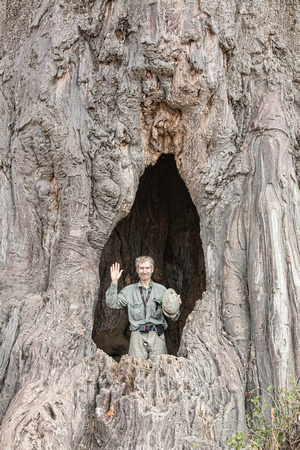 Justin in giant Baobab tree
