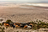 Herding into Ngorongoro Crater
